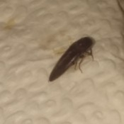 What Kind of Bug Is This? - long dark bug