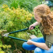 Woman with curly red hair trimming a Japanese Maple Tree.