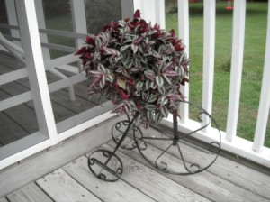 A purple Wandering Jew in a tricycle themed planter.
