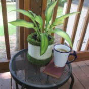 Using A Coffee Container As An Indoor or Outdoor Planter - decorated container on patio table