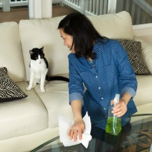 Woman spraying a glass table while looking at her cat.