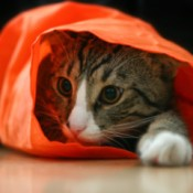 cat in orange bag