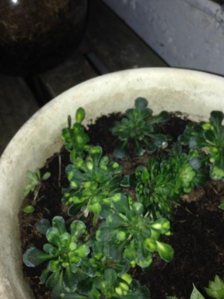 Identifying Houseplants