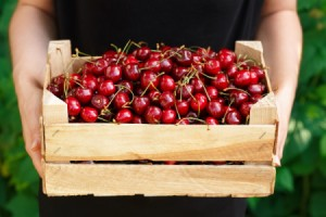 Hands holding a wooden box full of cherries.