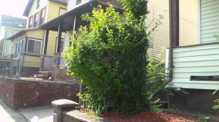 Trimming Shrubs Creatively