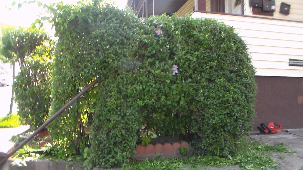 Topiary Landscaping Ideas Thriftyfun