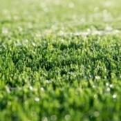 Closeup of artificial grass.