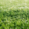 Closeup of artificial grass.
