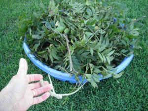 Use a Baby Pool to Cleanup Yard Debris - pool loaded with tree branches