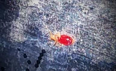 Identifying Little Biting Bugs   ThriftyFun
