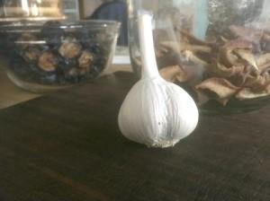 Planting Garlic - garlic clove