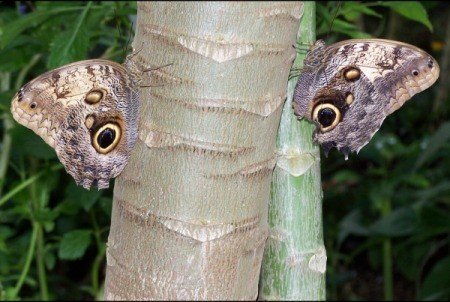 Elephant in the Garden - butterflies  on tree trunks that resemble an elephant