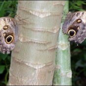 Elephant in the Garden - butterflies  on tree trunks that resemble an elephant