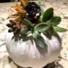 Succulent Pumpkin Planter - ready to display or gift