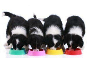 Four puppies eating from four separate colorful bowls.