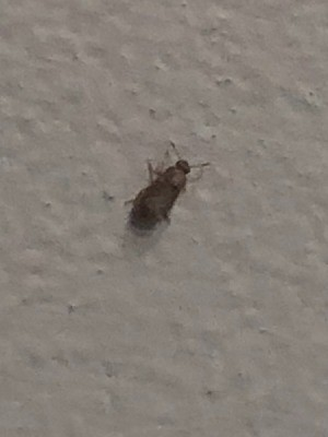 Identifying a Tiny Bug Found in the Bathroom