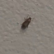 Identifying a Tiny Bug Found in the Bathroom