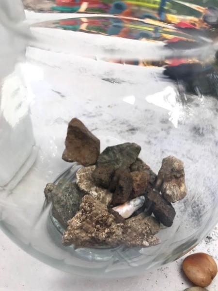 Kid Friendly Succulent Terrarium - optional glass  bowl