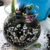 Kid Friendly Succulent Terrarium - glass terrarium with beads added