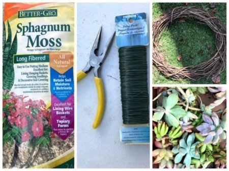 Succulent Wreath - supplies
