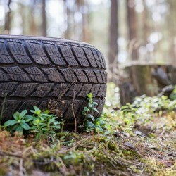 Tire on the ground outside near trees.