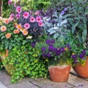 Container gardens with flowers.