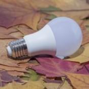 An LED lightbulb on a bed of leaves.