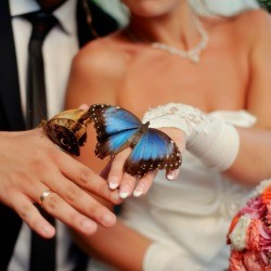 Bride and groom with butterflies on their hands.