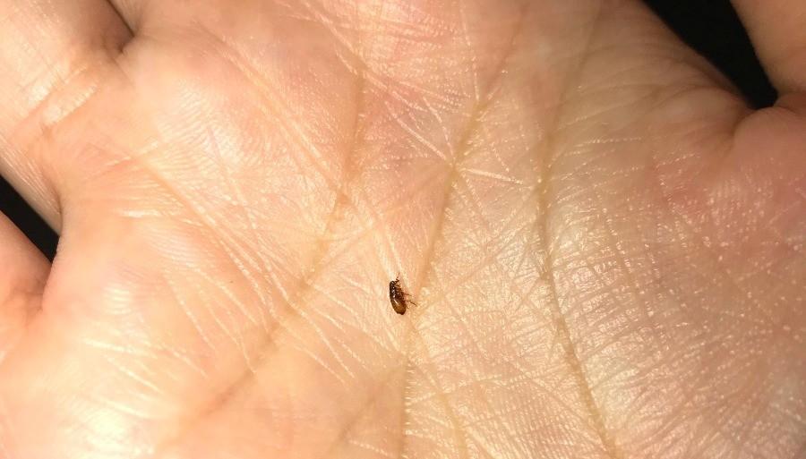 Identifying Small Brown Bugs Thriftyfun