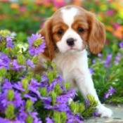 Puppy in a flower bed.