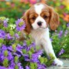 Puppy in a flower bed.