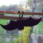 Hanging Bats - bat hanging in the window from a curtain rod