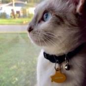 What Breed Is My Kitten?