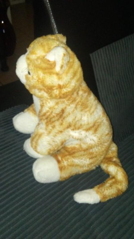 Identifying a Stuffed Kitty