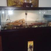 A dirty aquarium for turtles.