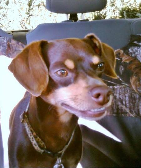 Tobias Nadler (Chipin) - brown and tan dog