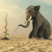 Planting a Desert Vegetable Garden - young elephant watering a bean plant in the desert