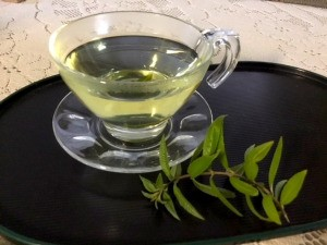 Making Loose Leaf Tea - clear tea cup of herbal tea with sprig next to saucer