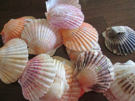 Shabby Chic Shell Ornaments - shells