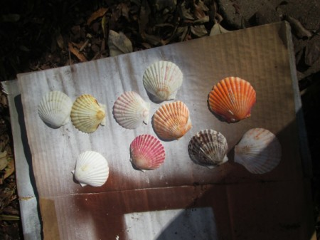 Shabby Chic Shell Ornaments - shells lying on cardboard