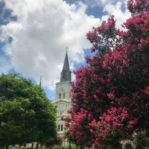 St. Louis Cathedral in background, with crape myrtle
