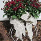 Adding Ribbon Flair To Planters - tan and white ribbon on pot of red mums sitting on a white plant stand
