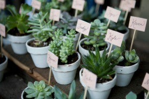 Plants with names attached as wedding favors.