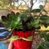 Succulent Planters - hand holding the red planter