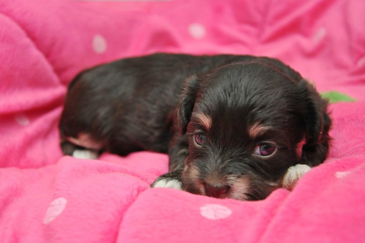 Feeding a 3 Week Old Puppy? | ThriftyFun