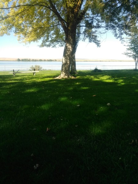 A tree on the bank of the Columbia River in Oregon.