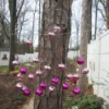 Clothes Hanger Wind Chime