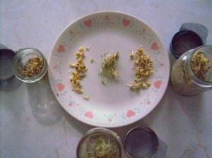 A plate containing different sprouted seeds.