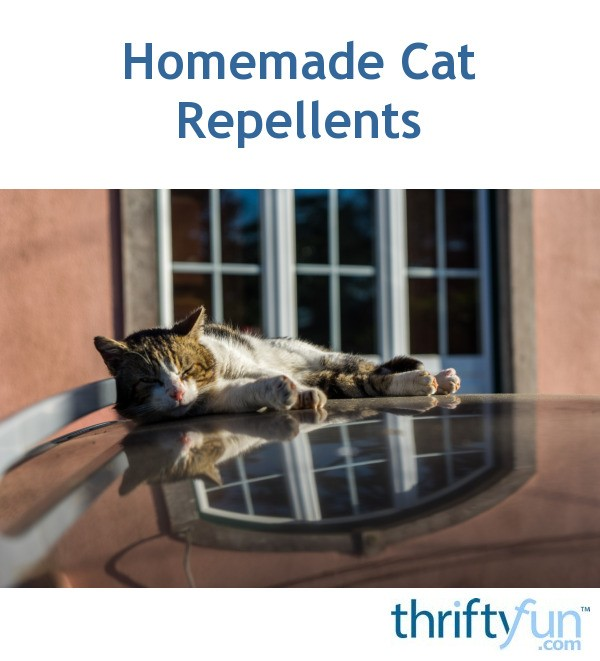 How To Keep Cats Off Patio Furniture.Homemade Cat Repellents Thriftyfun