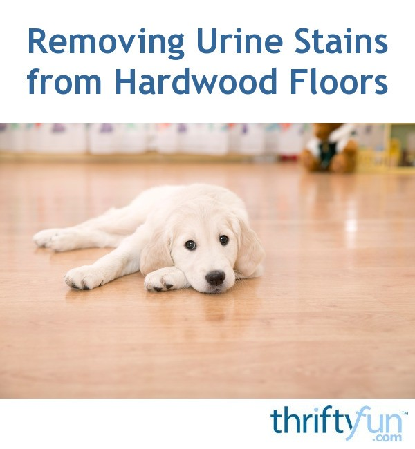 Removing Pet Urine Stains From Hardwood Floors